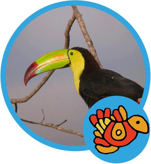 Observación de Aves en la Selva del Marinero